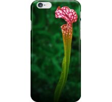 Pitcher Plant Rising iPhone Case/Skin