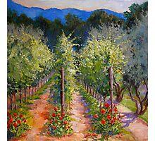 Vineyard Rose  Photographic Print