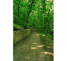 road in the woods Photographic Print