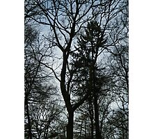 All the naked trees Photographic Print