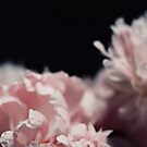 Perennial by ALICIABOCK