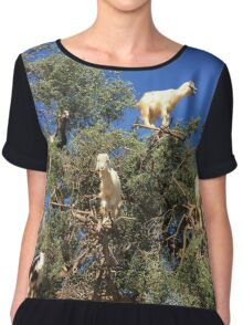 Goats in an argan tree Chiffon Top