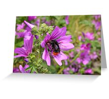 Rail Tailed Bumblebee Greeting Card