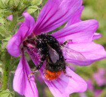 Rail Tailed Bumblebee Sticker
