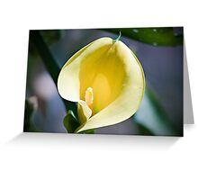 Cala Lilly in Vibrant Yellow Greeting Card