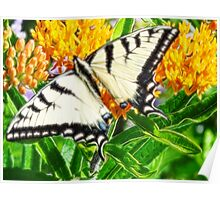 Swallow Tail in Fractalius Poster