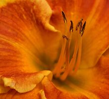 Daylily Close-up by Sandy Keeton