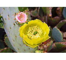 Prickly Pear Flower and Fruit Photographic Print