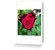 Red rose in an English garden Greeting Card