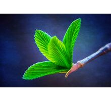 Vivacious Viburnum Leaves Photographic Print