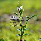 You Cannot Cure Stupid by Scott Mitchell