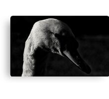Giving Me The Eye Canvas Print