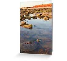 Green Sea Turtle at James Price Point Greeting Card