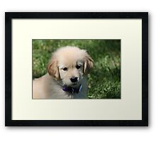 Puppy Eyes Framed Print