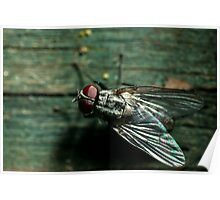 fly on wooden fence Poster