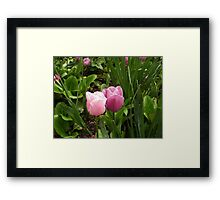 Tulips in love Framed Print