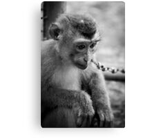 waiting monkey (black & white) Canvas Print
