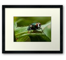 potrait of a green fly Framed Print