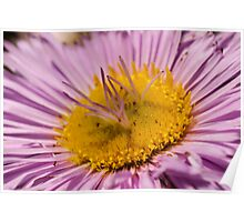 aster met bloemblaadjes in het hart Poster