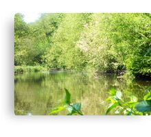 Pussy willow river – river wey Canvas Print
