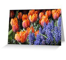 Fiery Tulips and Grape Hyacinths Greeting Card
