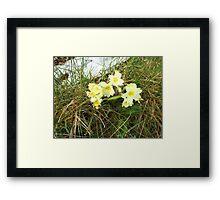 Wild Primrose Framed Print