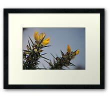 Thorny bush brush Framed Print
