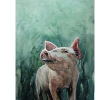 Mighty Fine Pig Photographic Print