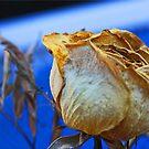 Dry Flower 3 by Chet  King