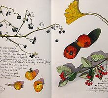 winter fruits by Evelyn Bach