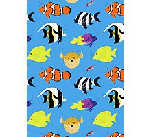 Clownfish and Friends Pattern Photographic Print
