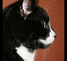 Handsome Tuxedo Cat Poses for Portrait by NoblePhotosCard