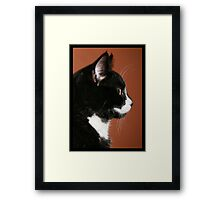 Handsome Tuxedo Cat Poses for Portrait Framed Print