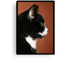 Handsome Tuxedo Cat Poses for Portrait Canvas Print