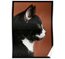 Handsome Tuxedo Cat Poses for Portrait Poster