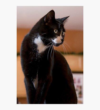 Elegant Tuxedo Cat Posing Photographic Print