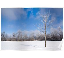 Icy Tree in Snowy Field Poster