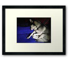 Sleeping Husky Puppy Framed Print
