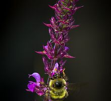 Bee on Flowers by RandyHume