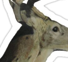 Portrait of a Deer Sticker
