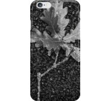 From the acorn tree iPhone Case/Skin