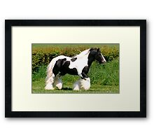 elite horse Framed Print
