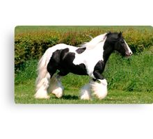 elite horse Canvas Print
