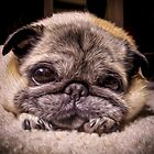 Pug Eyes by boodapug