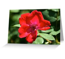 Sunshine Flower Greeting Card