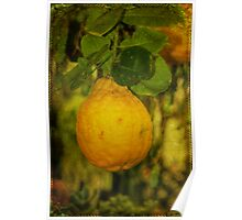 Fruit Of The Lemon Tree Poster