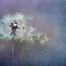 The four winds by Priska Wettstein