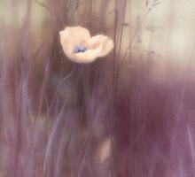 Pulchritude by Priska Wettstein