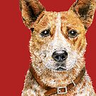 Beaut Australian Cattle Dog - Red by didielicious