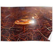 Mushroom The Gorge, Launceston Tasmania, Australia Poster